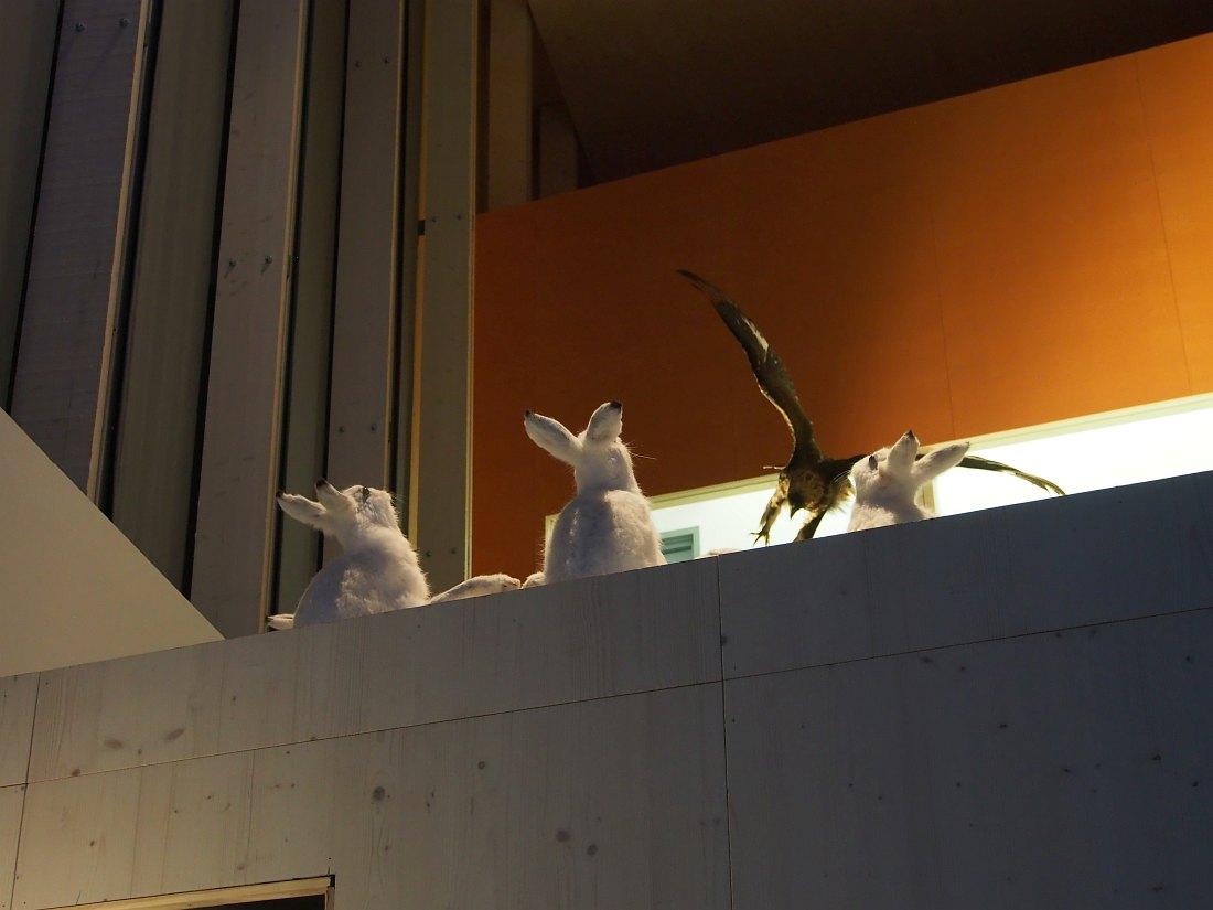 Под потолком центрального зала музея чучела зайцев напряжённо следят за чучелом хищной птицы