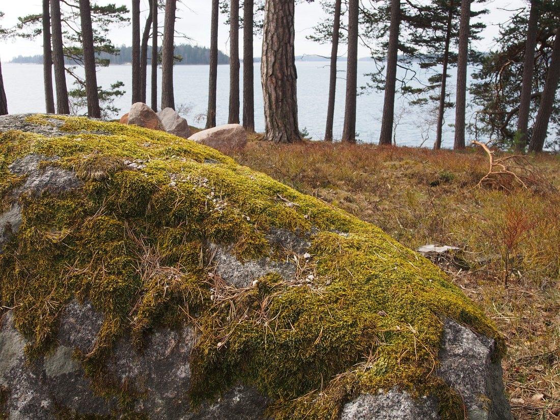 Побережье Финского залива у центра Hanaholmen